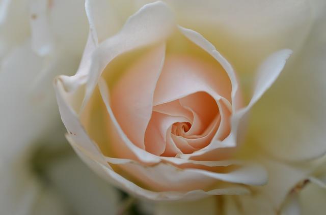 דוכן שזירת פרחים לחתונה